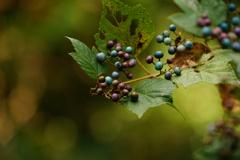 秋の宝石箱