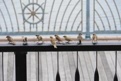 雀の学校の夏休み