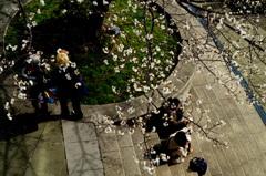 春は桜の木の下で
