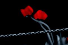 赤い花(残像#2)