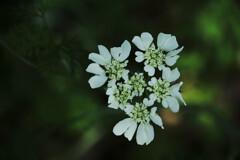 煌めく野の花