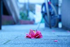 Flowers Gone