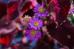 秋の小さな花壇