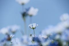この花の季節