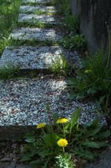 タンポポの咲く道