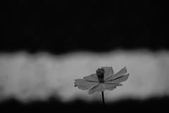 野の花の行方