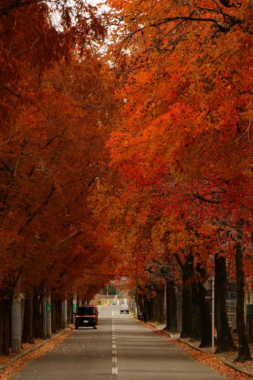 秋は木立ちを抜けて