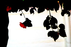 紅い花が咲いてた