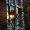 教会の窓に冬の陽射し