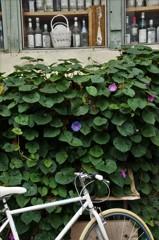 季節を引き継ぐ壁