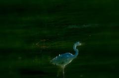 水辺の鳥影