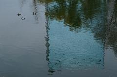 ビル影と水鳥
