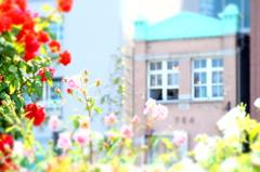 薔薇園の午後