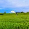 富士と茶畑 -今宮-