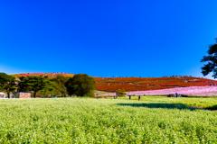 白とピンクと赤と青い空