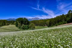 中山高原のそば畑