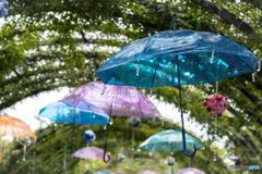 Umbrella♪
