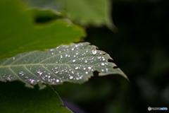 Raindrop♪