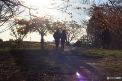 晩秋の散歩道♪