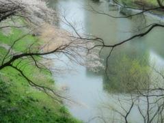 春のささやき~Whisper of spring♪