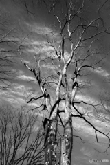 Tree of Life♪