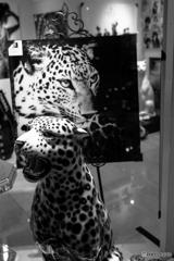 PANTHERE de Cartier♪~試写