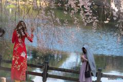Fleurs de cerisier au Vietnam♪