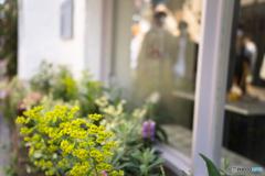 White windowside flowers♪