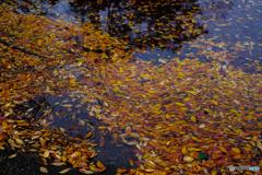 落葉の舞い散るころ♪