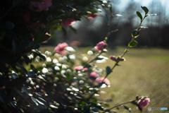 躍動の春♪