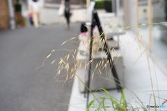 都会の線香花火♪