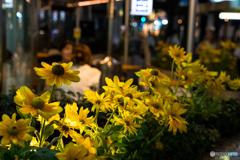 Ginza Flower Garden♪
