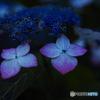 INDIGO BLUE♪