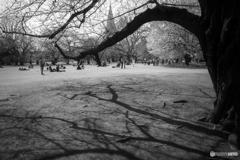 Central Park♪