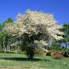 ズミの花咲く高原