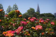 薔薇咲く御苑