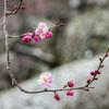 春の淡雪 (2)