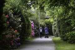 シャクナゲの散歩道