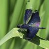 蝶とんぼ (1)