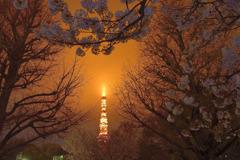 霧雨に煙る