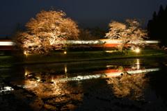 飯給の夜桜