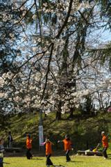 権現堂桜堤。