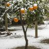 春の淡雪 (1)