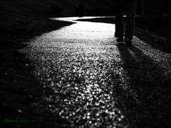 夕暮れの散歩道..