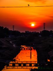 夕暮れの運河 〜夕日と白鷺と〜