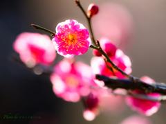 春色の微笑み..