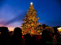 黄昏れのクリスマスツリー..