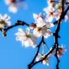 秋桜(あきざくら)..#2