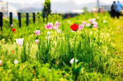 野に咲く・・#2
