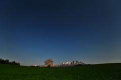 星空の小岩井農場一本桜